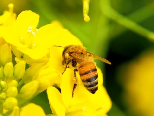 クロスズメバチに刺されたら