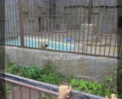 円山動物園娘とデート