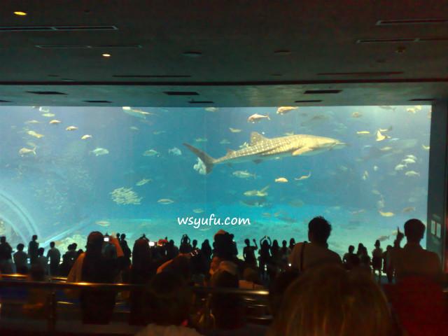 500円貯金で沖縄旅行 美ら海水族館