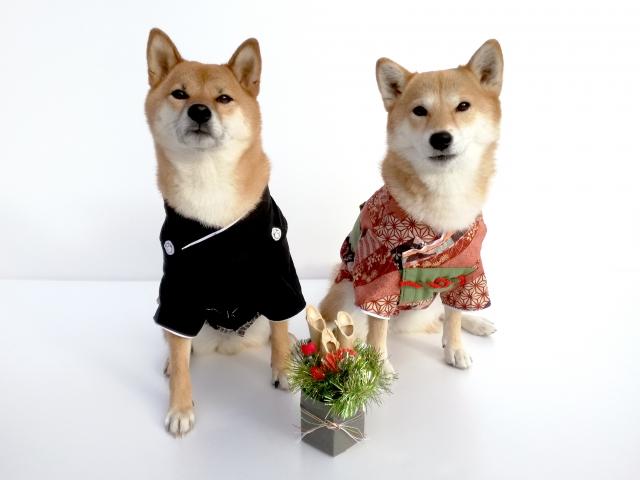 2018年 犬年