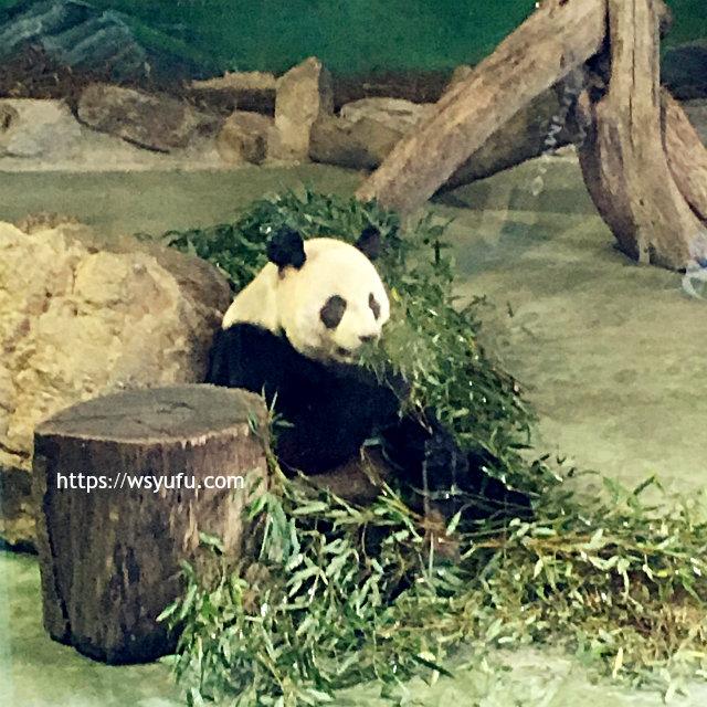 台湾旅行 子連れ パンダ 台北市立動物園