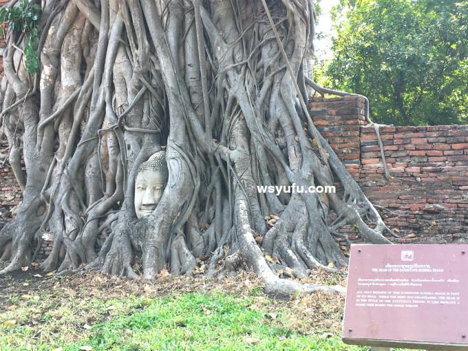 タイバンコク家族旅行 アユタヤ遺跡ツアー ワット・マハタート