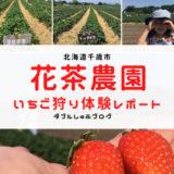 いちご狩り 花茶農園 北海道千歳 札幌近郊 体験談