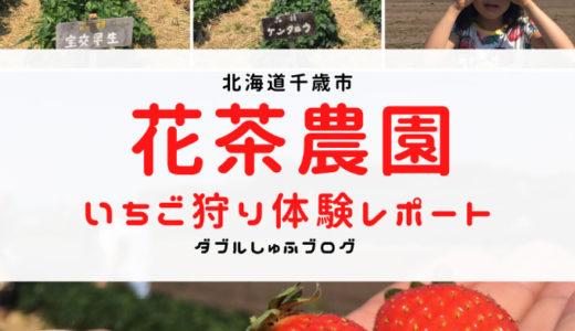 北海道千歳市花茶(かちゃ)農園いちご狩り体験レポート!2020年は6月10日オープン!