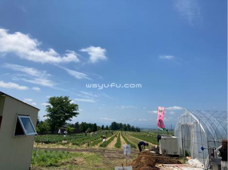 イチゴ狩り 千歳 花茶農園 札幌近郊